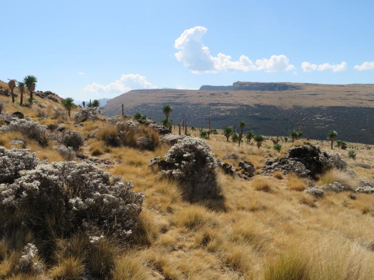 Ethiopia Simien Mts, Simien Mountains, Imet Gogo walk, Walkopedia