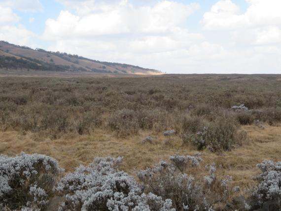 Ethiopia South Bale Mts, Bale Mountains, Gaysay Grasslands, dry season , Walkopedia