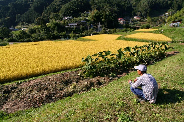 Nakasendo Way: Field in Kiso - © Walk Japan