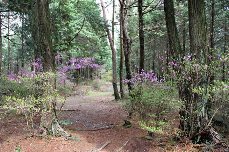 Nakasendo Way: Trail - © Walk Japan