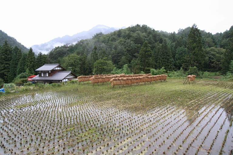 Rice paddy, Nojiri - © Walk Japan