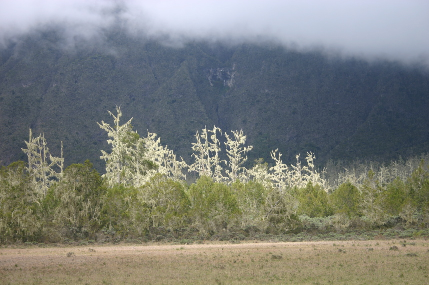 Mt Meru: Light on vegetation in the lower crater - © William Mackesy