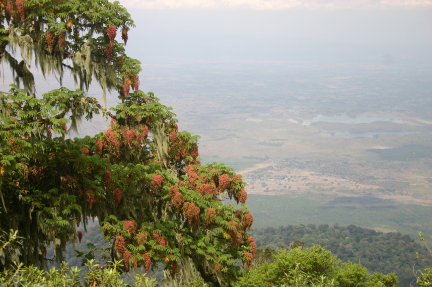 Mt Meru: View and vegetation - © William Mackesy