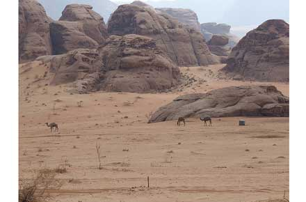Wadi Rum - camels - © By Flickr user rpoll