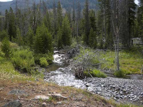 USA Western: Yellowstone NP, The Thorofare Trail, The Thorofare Trail - , Walkopedia
