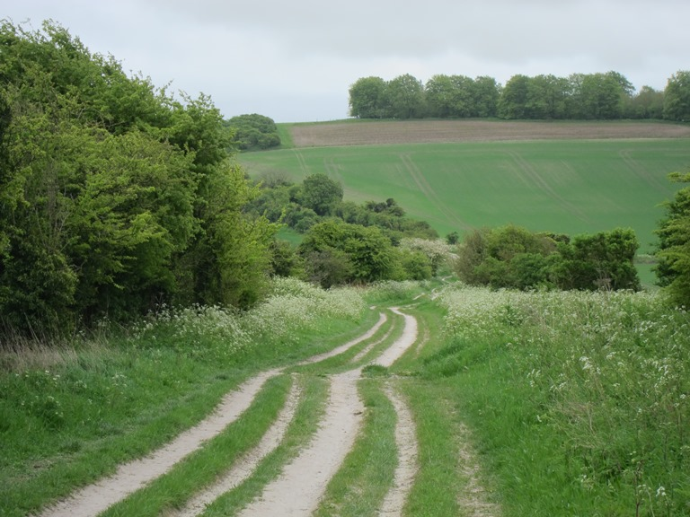 The Ridgeway:  Chalky and windy - © William Mackesy