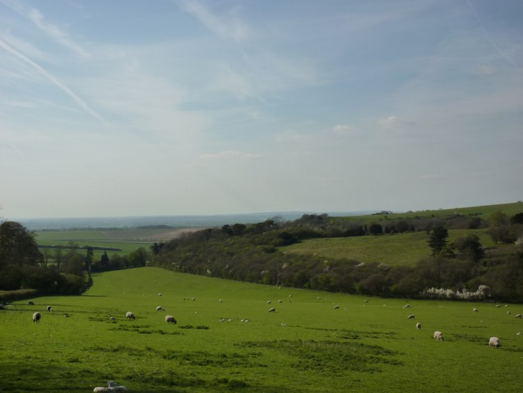 The Ridgeway: Near Swyncombe - © Copyright Flickr user Bods