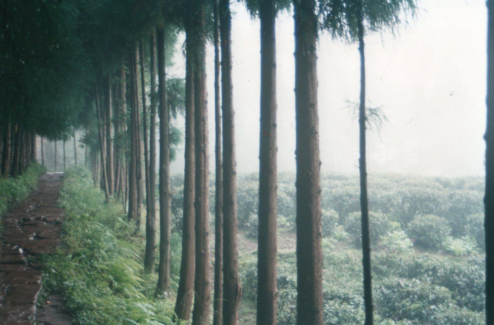 China Sichuan, Emei Shan, Tea plantations on the lower slopes, Walkopedia