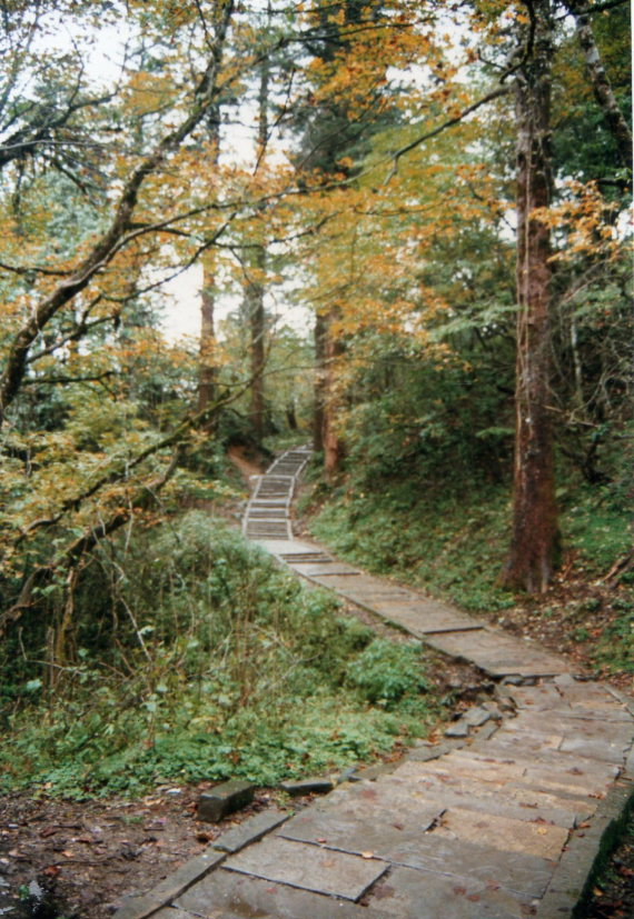 Emei Shan: Ancient stone path, autumnal forest - © William Mackesy