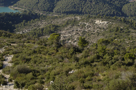 Montagne Sainte Victoire Herbs and Juniper - © From Flickr, by Jatdoll