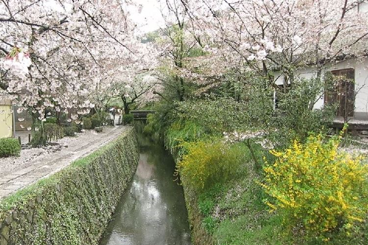 Daimonji-yama and Philosopher's Path, Kyoto: Philosopher's Walk