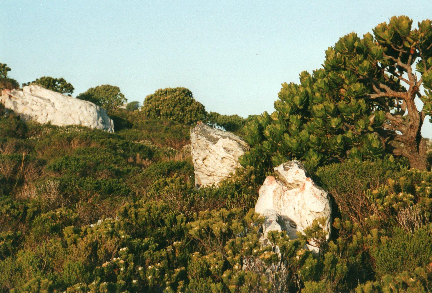 South Africa Western Cape Cape Area, Cape of Good Hope, Cape of Good Hope - glorious fynbos, Walkopedia