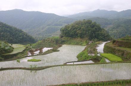 Banaue Rice Terraces: