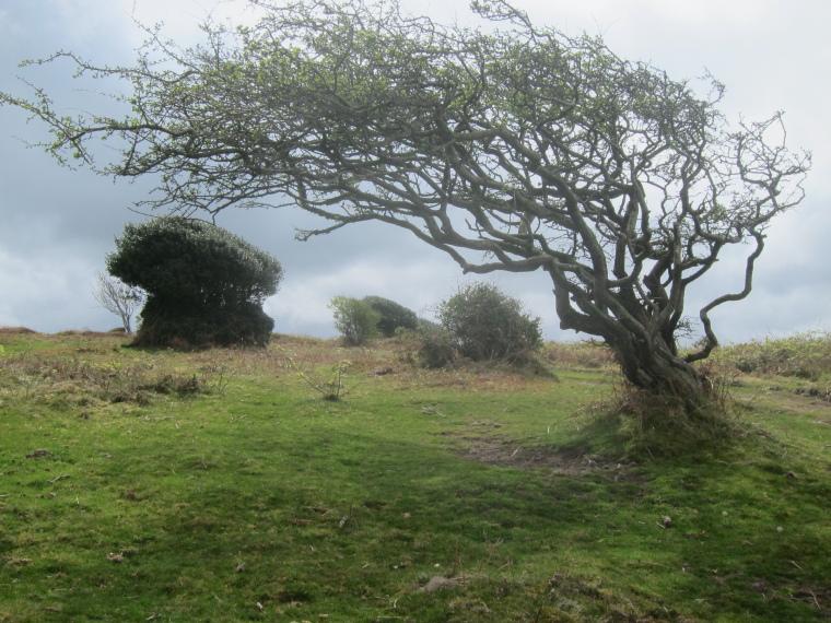 United Kingdom England South-west, South West Coast Path, Coastal hills West of Minehead, Walkopedia