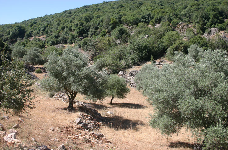 Jordan, Ajloun Woodland Reserve, Forest and Farmland - by William Mackesy, Walkopedia