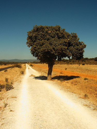 Camino Frances - © By Flickr user Jule_Berlin