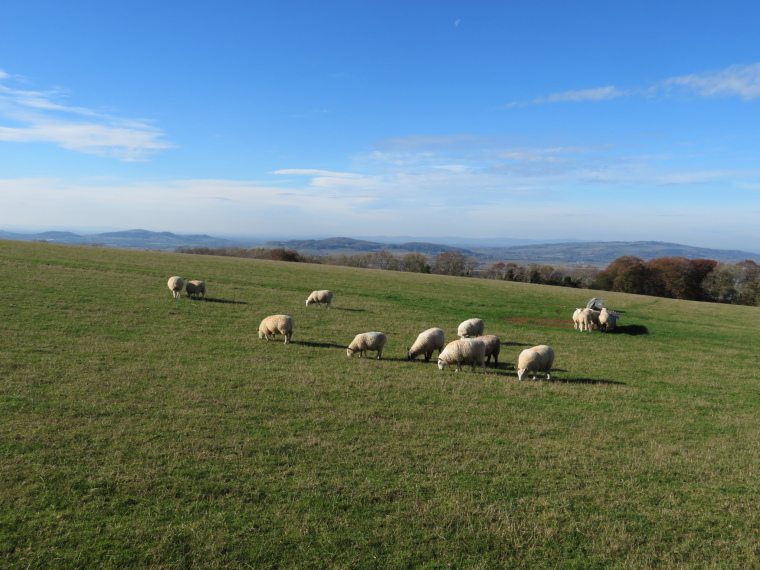Cotswold Way: Towards Severn valley