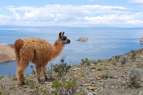 Llama, Isla del Sol - © By Flickr user Ivan Mlinaric