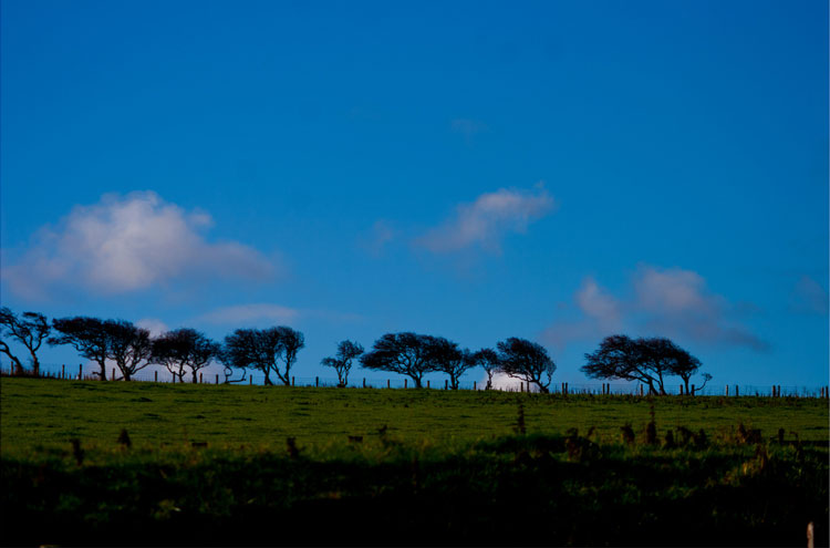 Trees on Windswept Moors - © By Flickr user deargdoom57