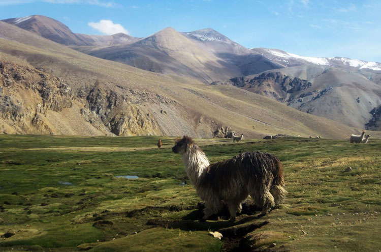 Peru South Arequipa Area, Cotahuasi and Colca Canyons, Cotahuasi - © From Flickr user Xtremizta, Walkopedia