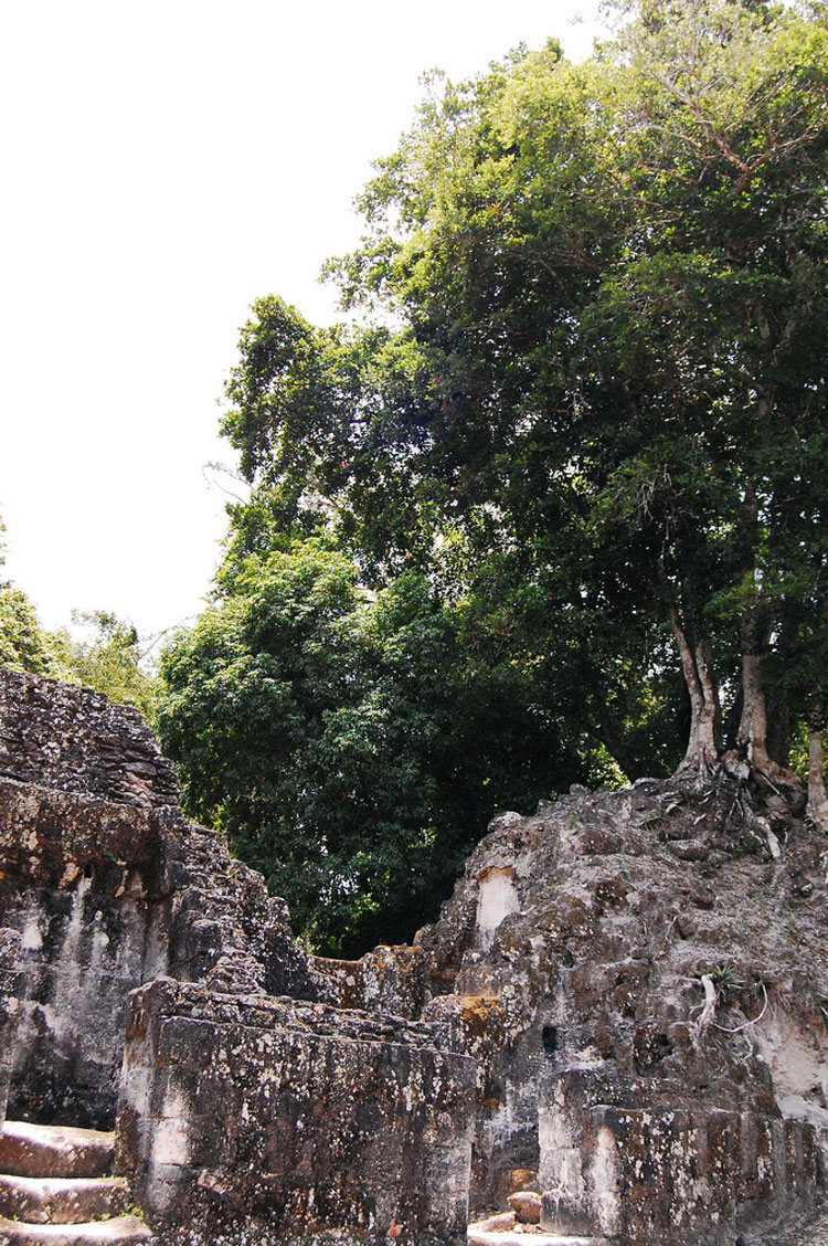 Tikal - © By Flickr user SaucySalad