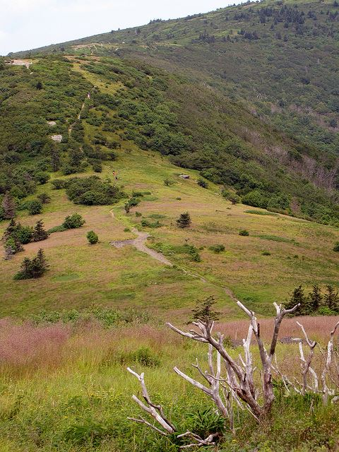 Appalachian Trail - climbing to the Jane Bald - © Flickr user BlueRidgeKitties