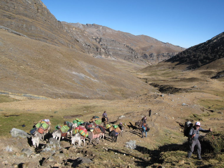 Huayhuash Circuit: Burros overtake trekkers on the trail - © Charles Bookman