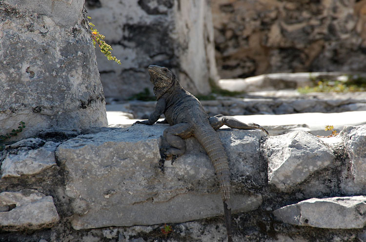 Tulum, and Coba to Yaxuna: Tulum - © By Flickr user joannapoe