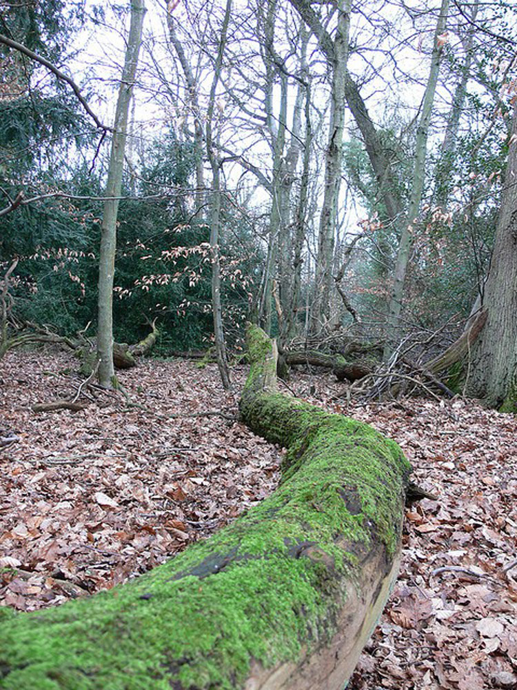 Woods, Box Hill - © By Flickr user