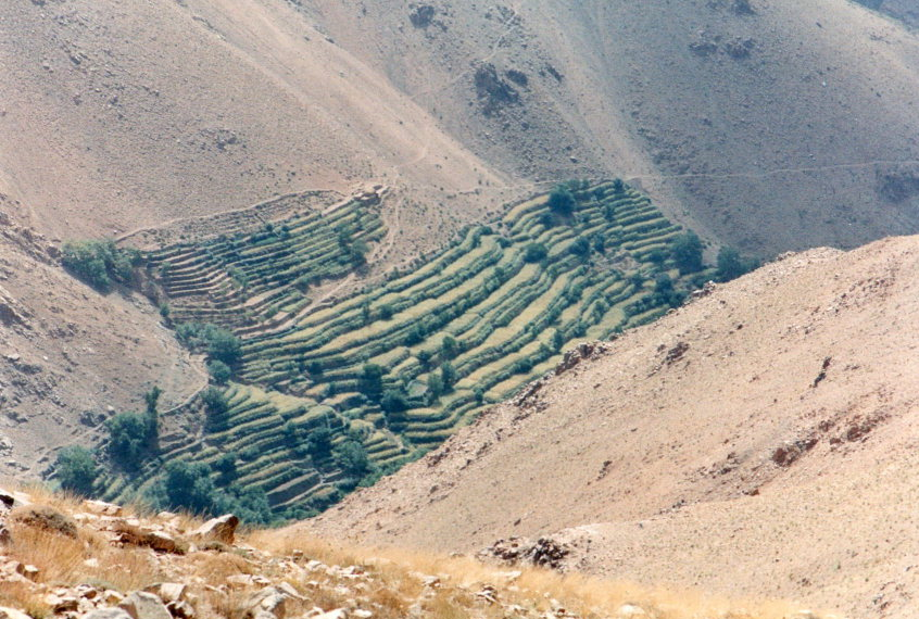Jebel Toubkal Circuit: Berber terraces high on dry slopes - © William Mackesy