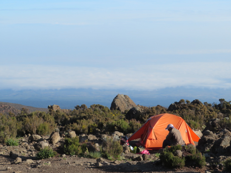Mount Kilimanjaro : Buffalo camp - © William Mackesy