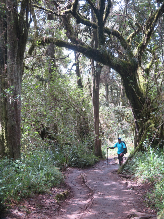 Mount Kilimanjaro : Cloud forest, Mweka Trail - © William Mackesy