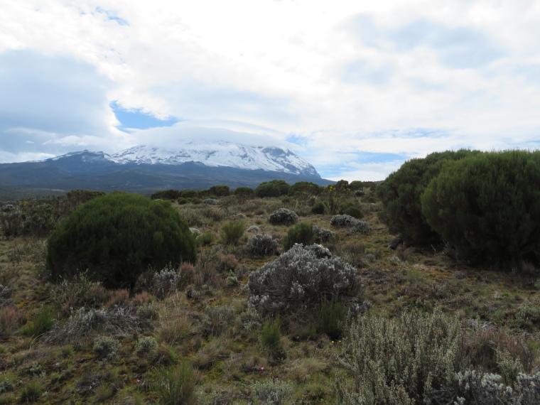 Tanzania Mount Kilimanjaro, Trekking Kilimanjaro , Kibo from foot of Shira Cathedral, Walkopedia