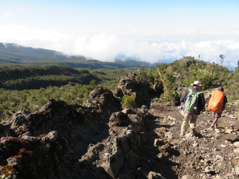 Tanzania Mount Kilimanjaro, Trekking Kilimanjaro , Lava sill, giant heather, below Millennium camp, Walkopedia