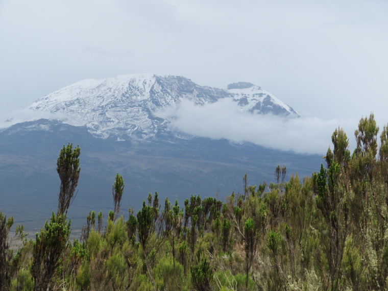 Tanzania Mount Kilimanjaro, Trekking Kilimanjaro , Lemosho Route, Day 2, Shira plateau lip, first Kibo view, Walkopedia