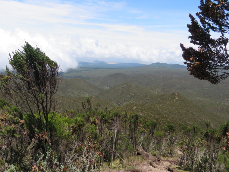 Mount Kilimanjaro : Lemosho Route, Day 2, back down over giant heather hillsides. - © William Mackesy