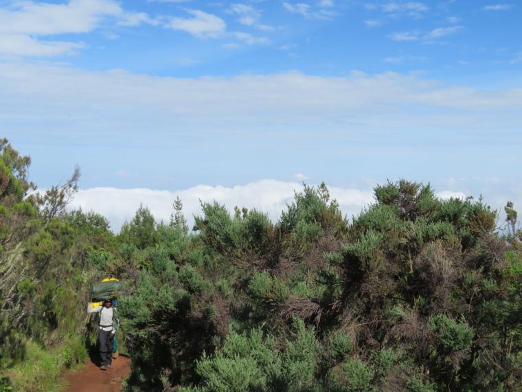 Tanzania Mount Kilimanjaro, Trekking Kilimanjaro , Lemosho Route, Day 2, giant heather forest, Walkopedia
