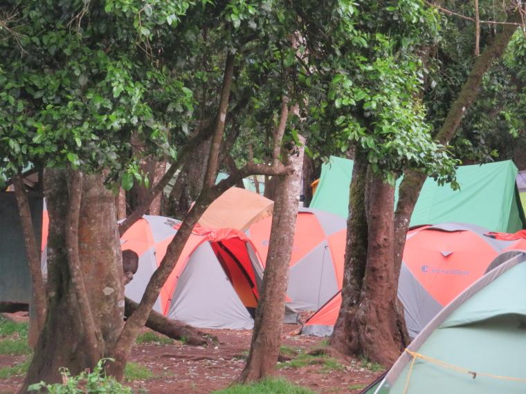 Mount Kilimanjaro : Lemosho Route, Forest camp - © William Mackesy