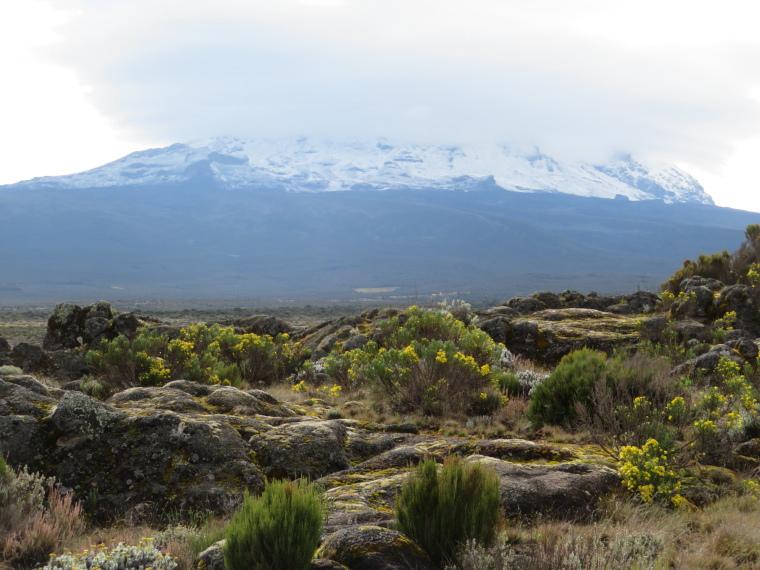 Mount Kilimanjaro : Lemosho, Shira Route,   Shira Plateau - © William Mackesy