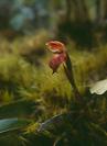 Orchid - © John Benson