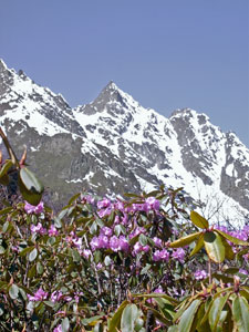 Green Lake: Himalayan rhododendrons - © David Briese, www.gang-gang.net/nomad