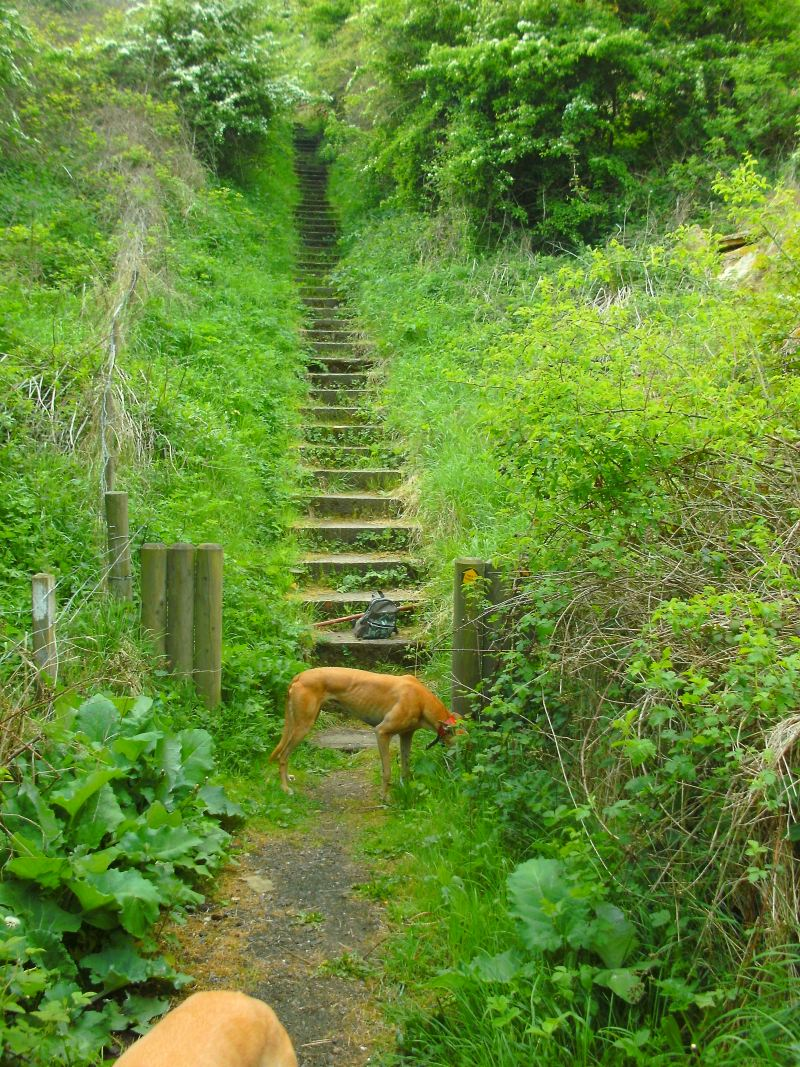 Green steps - © Maureen Nisbet