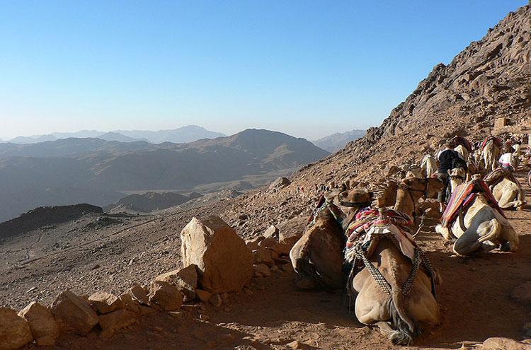 Mount Sinai, Camels - © From Flickr user EvilJohnius