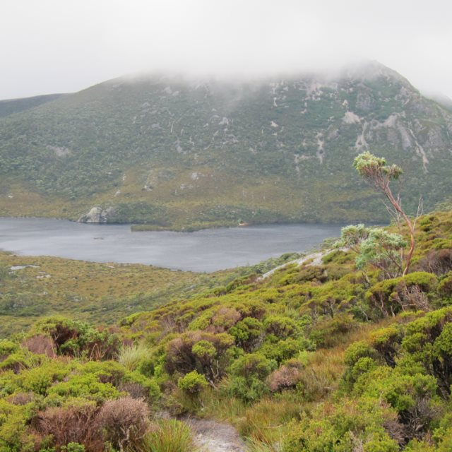 Cradle Mountain - Dove Lake  - © Copyright William Mackesy