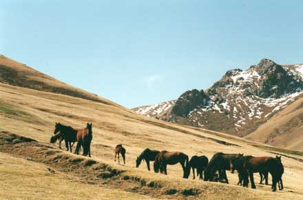 Pony herd on hillside - © William Mackesy
