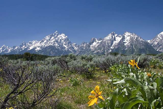 Grand Teton National Park - © Copyright Flickr User gr8dnes