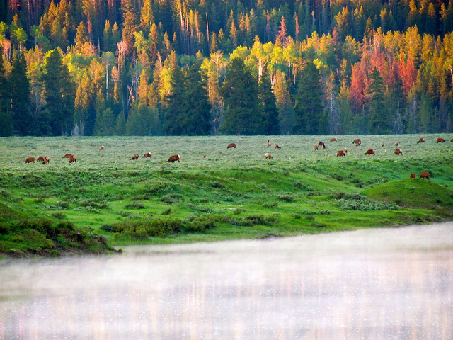 Grand Teton National Park - © Copyright Flickr User jeffgunn