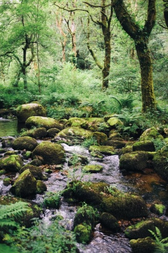 From Holne to around Chagford in Dartmoor  - © flickr user- BlondieISFC