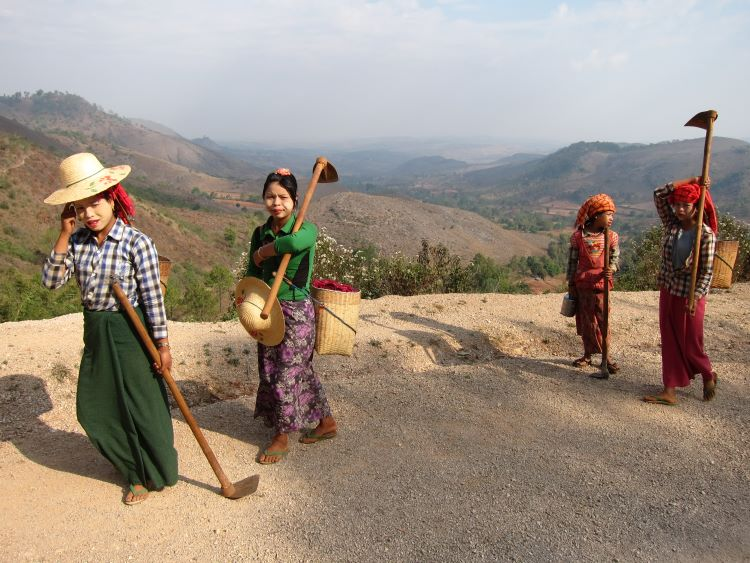 Kalaw to Inle trek - Off to the fields - © Copyright William Mackesy