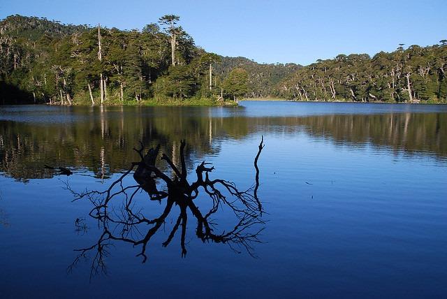 Laguna Captren, Conguillio NP - © Copyright Flickr user Matero